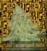 Big Head Big Cheese Auto Female 5 Marijuana Seeds